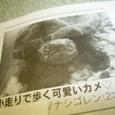 Nasinasi_003