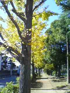 お散歩する公園